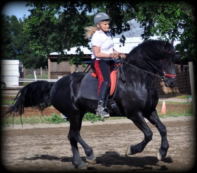 Friesian Stallion Zen5.jpg2