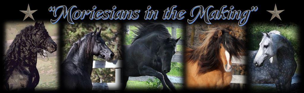 Header Stallions