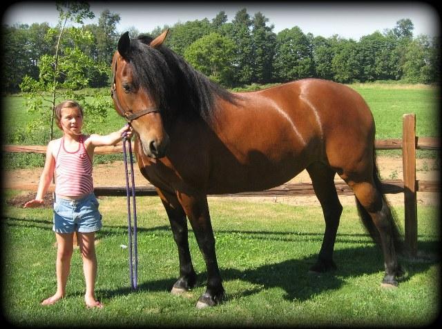 Horses 033.jpg2