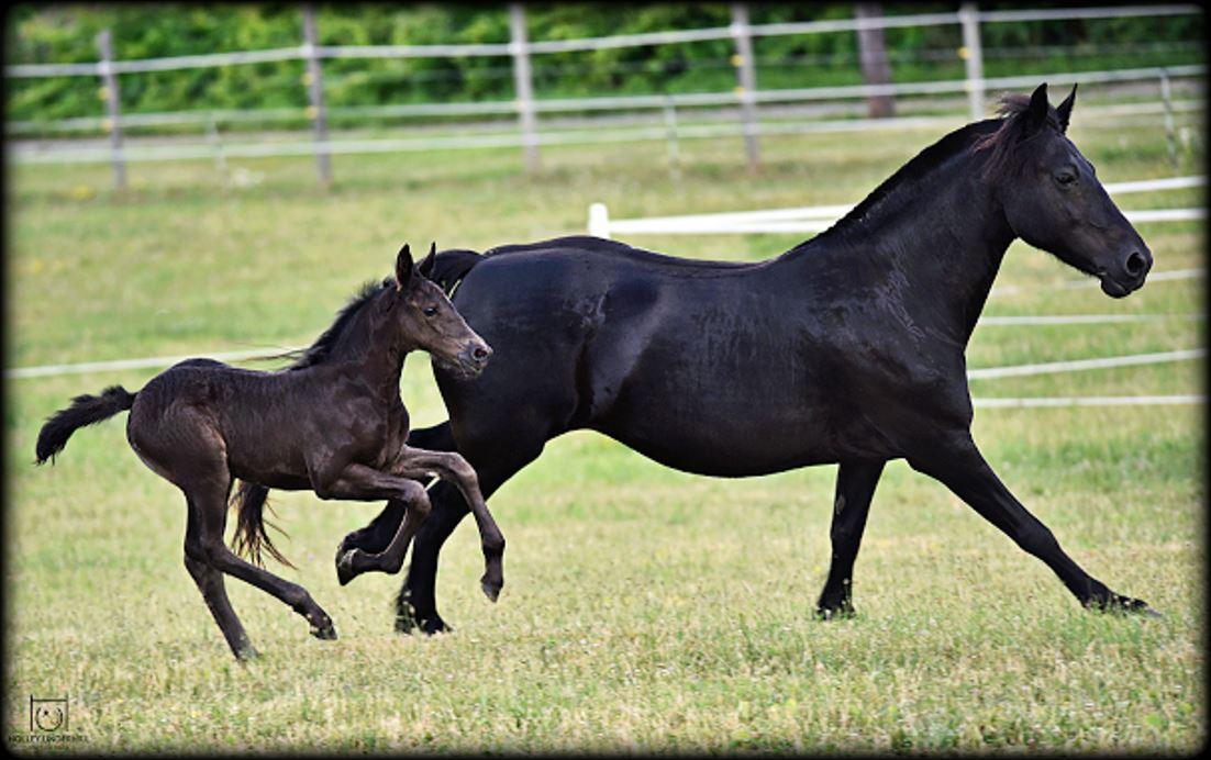 Lindsay mare foal.JPG2